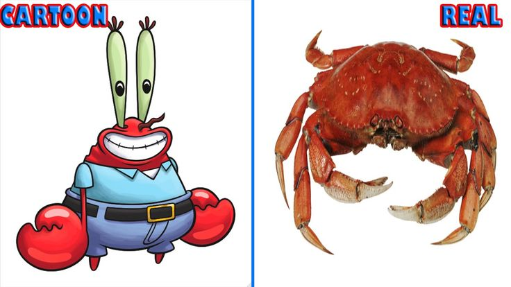 #Spongebob's Real Characters