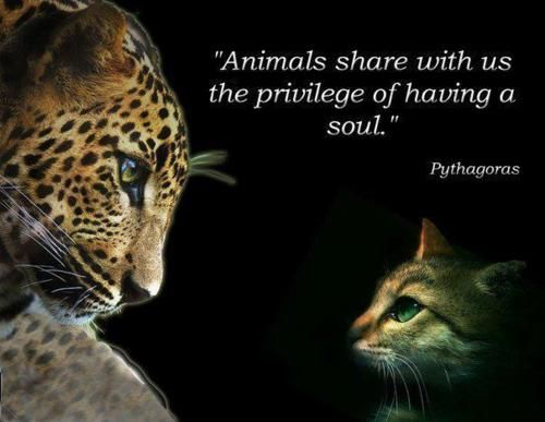 """Animals share with us the privilege of having a soul.""—Pythagoras"