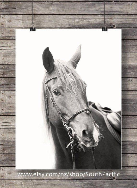 Rabid Horse Artwork Home Facebook - 570×784