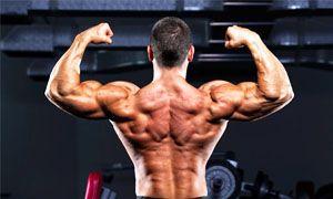 I muscoli sono organi deputati al movimento del corpo o di alcune sue parti. L'attività muscolare, dunque, non è importante soltanto per la locomozione...