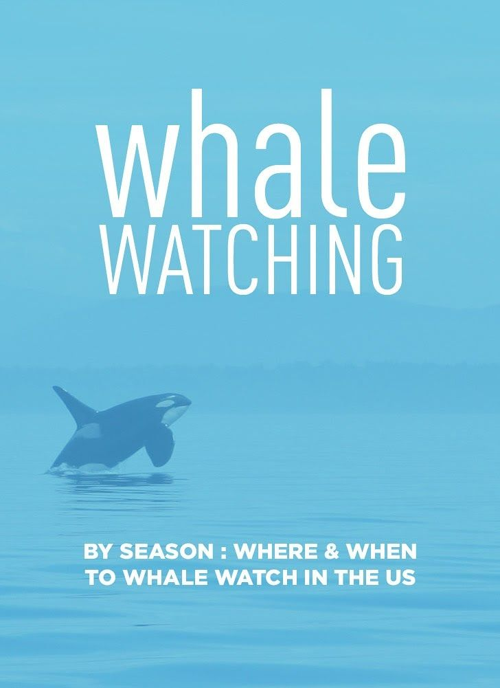 15 Best Places to Whale Watch in the US.