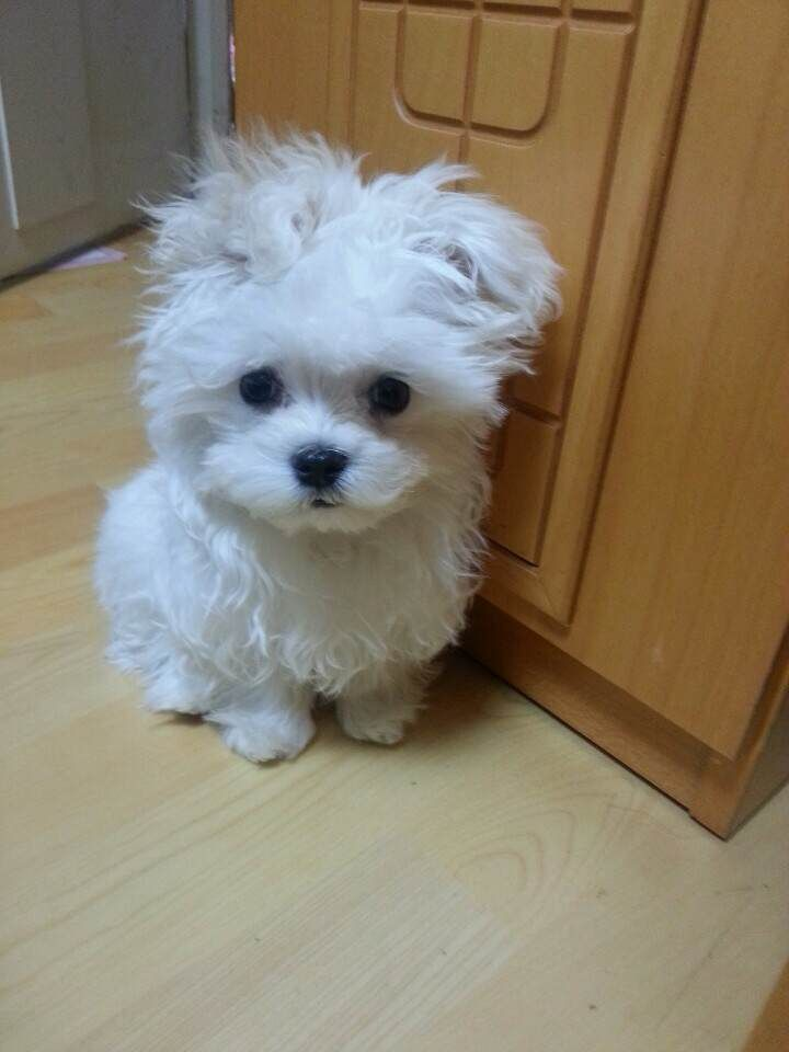 25 best ideas about little dogs on pinterest adorable