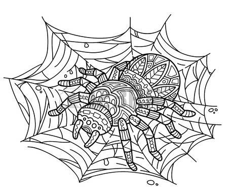 african spider: Cute spider on web. Vector illustration of