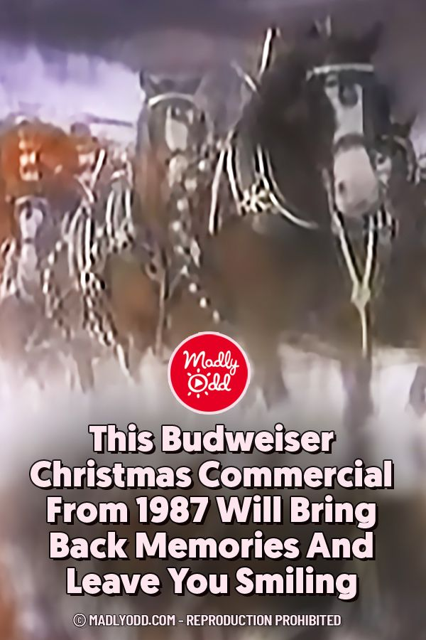 These majestic Clydesdales have been bringing Christmas cheer for