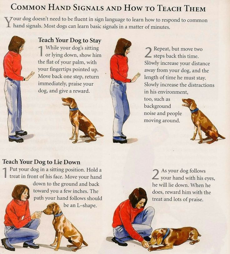 How To Train Your Dog Basic Obedience