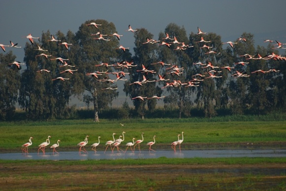 Oasis of Salso Lake, Gargano, Apulia region, Foggia province, Open South Project