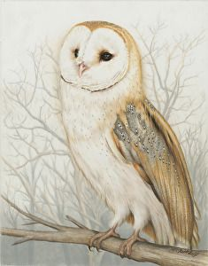 Coosa River Barn Owl By Heather A Mitchell An Artist Based In Pensacola Florida Draws Beautiful Colored Pencil Drawings Of Wildl