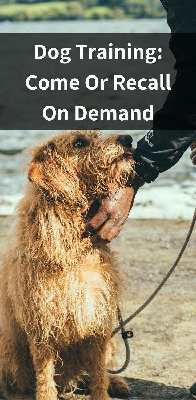 10 Pro Tips For Dog Training By Experts Dog Training Dog