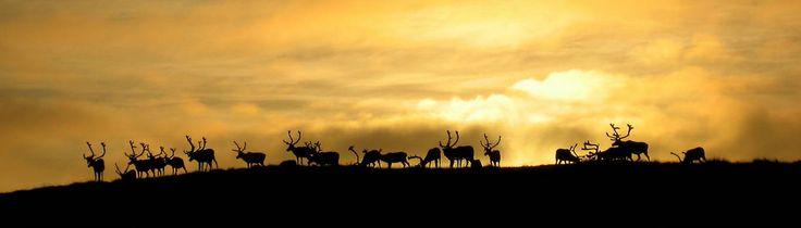 Las 4 Laponias y Cabo Norte: Noruega, Suecia, Finlandia y Rusia