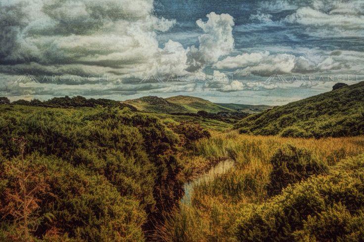 Dartmoor by Sarah Jarrett