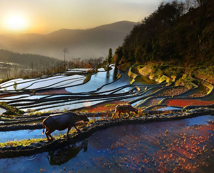 Thailand based photographer, Weerapong Chaipuck, captured these stunning Asian landscapes and its residents.