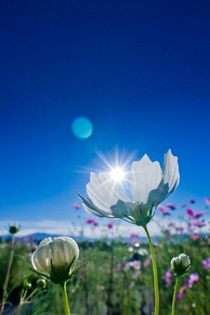 True love | 植物 > 花・花びらの写真 | GANREF