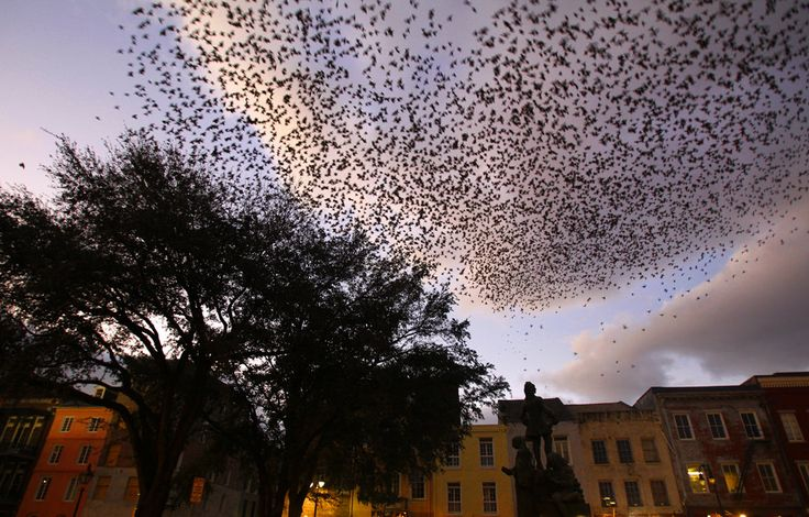 """River of Raptors"" - Migrating Birds of Mexico"