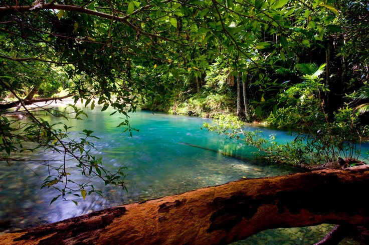 Cooper Creek, Daintree Rainforest, Australia-swam here many times when living in Daintree