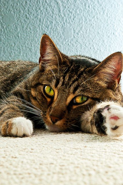 """""""Cats seldom make mistakes, and never make the same mistake twice."""" --Carl Van Vechten"""