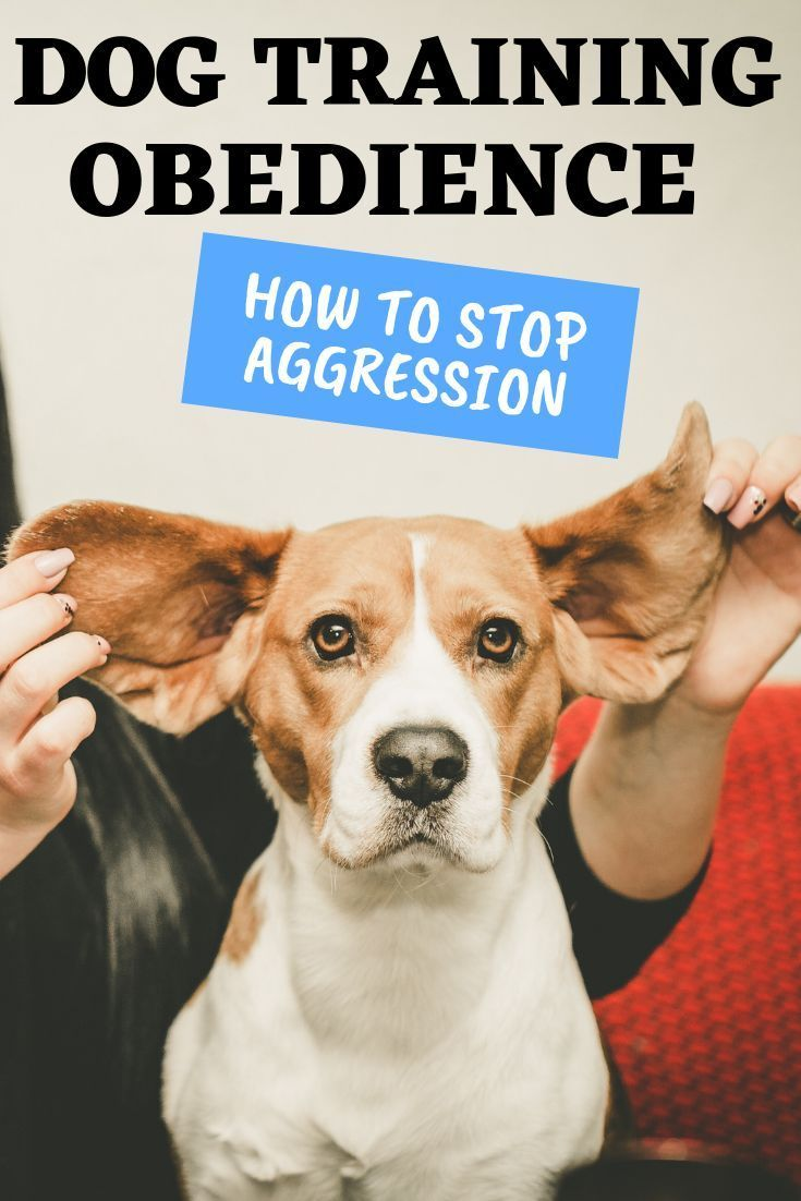Dog Training Obedience How To Stop Aggression Teach Your Dog How
