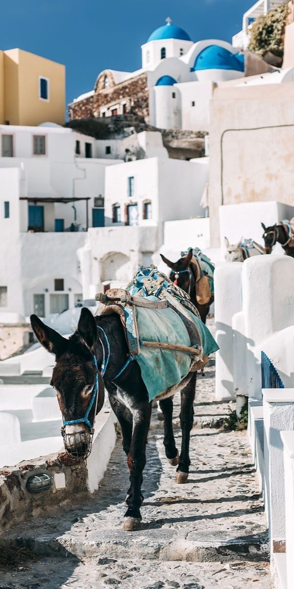 Greece Travel Inspiration - Donkeys on the street of Oia, Santorini (Cyclades), Greece
