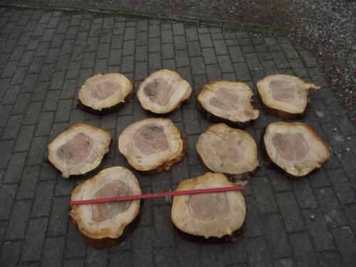Tischdeko,Deko,Baumscheibe,Apfel,Basteln, 30 - 36 cm Breit,Ketten in Grevesmuehlen