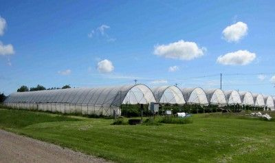 TunnelBerries research project offers growers knowledge on expanding raspberry, blackberry and strawberry production using protective structures or tunnels.