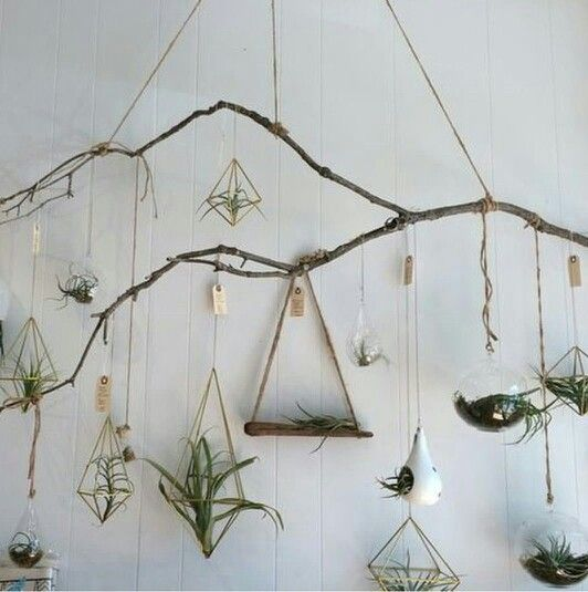 Love . houseplants . branch . nature .