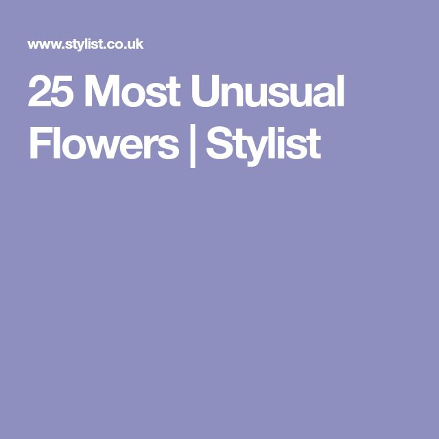 25 Most Unusual Flowers | Stylist