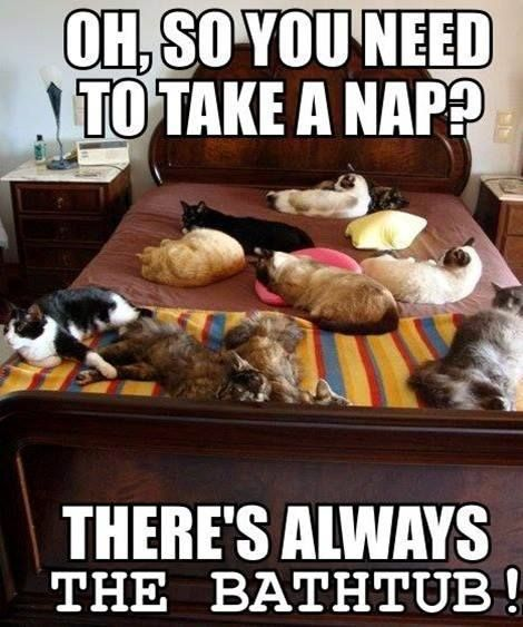 9d92916e317b080fc908f6c92082ca4e king size beds animal humor 638 best more cats ) images on pinterest funny animals