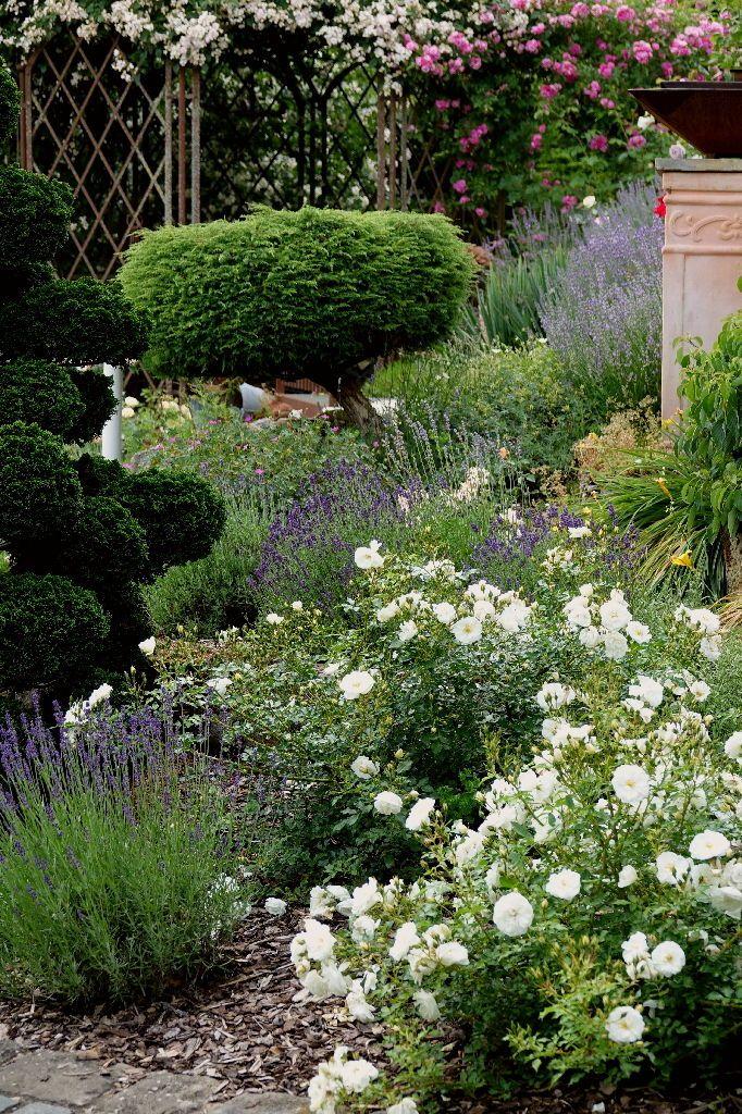Gartenreportage Garten Der Superlative Mit Weiher Und Rosen Weisse Rose Garten Lavendel Gartengestaltung