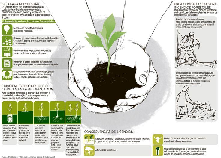 Reforestación e incendios