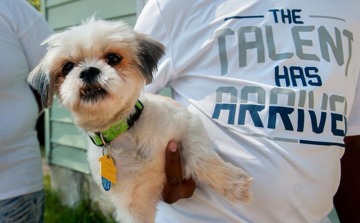 """After Pepper ran off on Independence Day, Kristin McKinley and her kids thought the shih tzu was gone for good.""""I'd been so sad, crying and"""