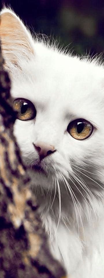 5 Cats That Are Prettier Than Most Humans