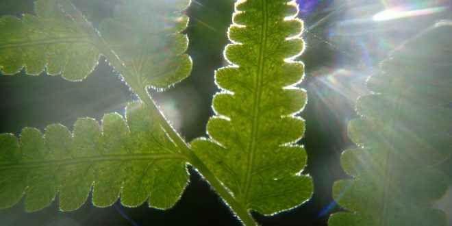 Il Ciclo Di Calvin-Benson e la Rubisco Il ciclo di Calvin-Benson della fotosintesi clorofilliana è un processo metabolico ciclico che avviene nello stroma del cloroplasto e che utilizza ATP e NADPH provenienti dalla fase luce-dipendente p