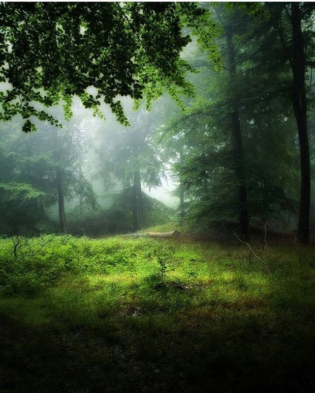 "Polubienia: 3,345, komentarze: 33 – @divine_forest na Instagramie: ""presents birthday feature  __________________________  @falconforrest  __________________________…"""