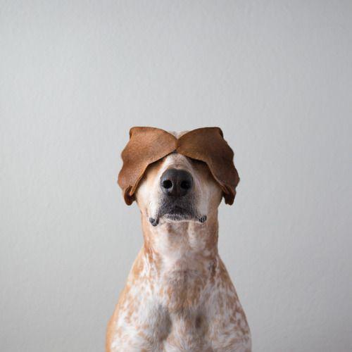 #Dog Lovin' - Maddie On Things  http://www.bellabellavita.com/2013/05/dog-lovin-maddie-on-things.html