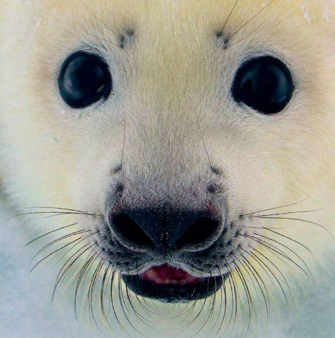 Baby seal need it framed