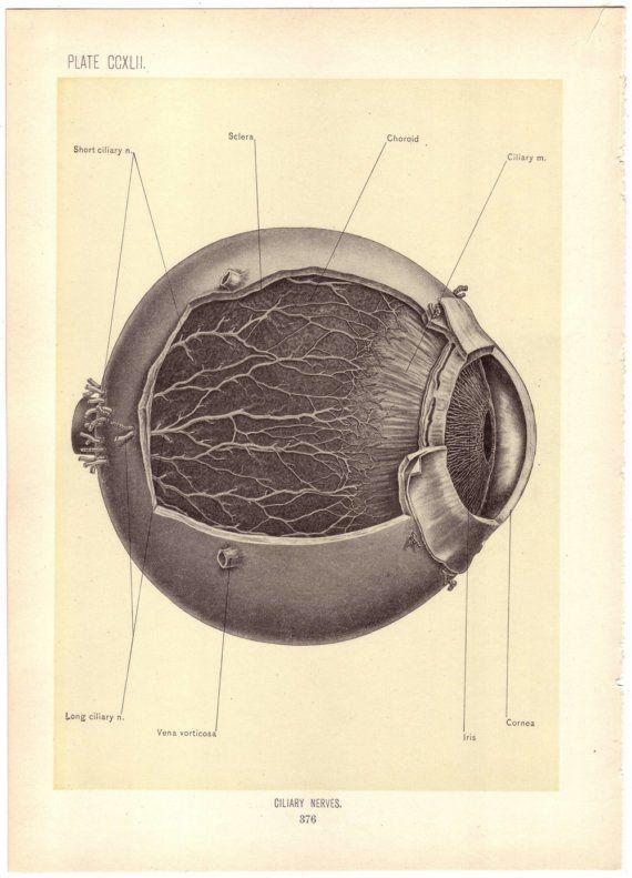 Antique illustration of the eye, 1899