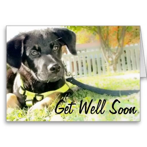 Custom Get well soon, cute puppy card