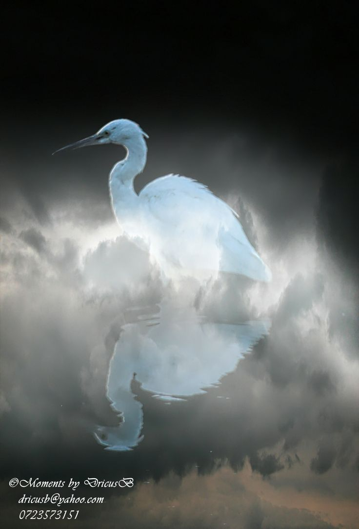 Misty hunt - Egret