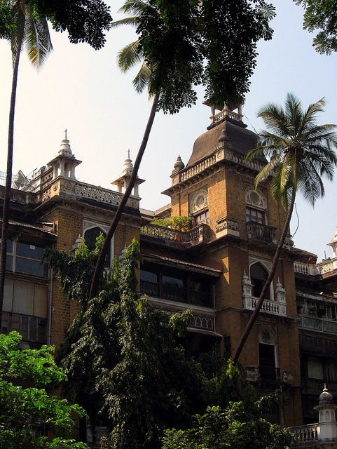 University of Mumbai  Scene with tall palm trees from the (former?) University of Mumbai buildings    All images copyright Tammy Winand  Available as prints on request (mail me or visit my other sites-links in profile)