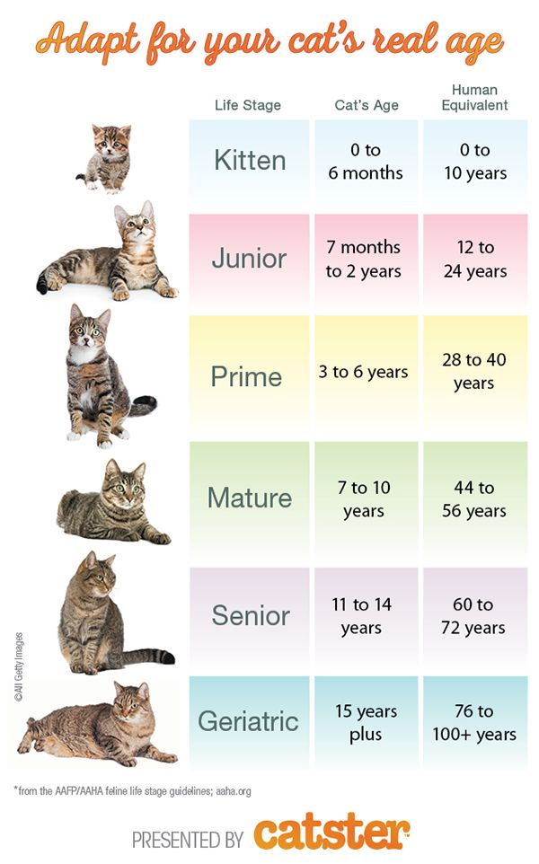 How To Calculate Cat Years To Human Years Catster Cat Ages Cat Lifespan Cat Years