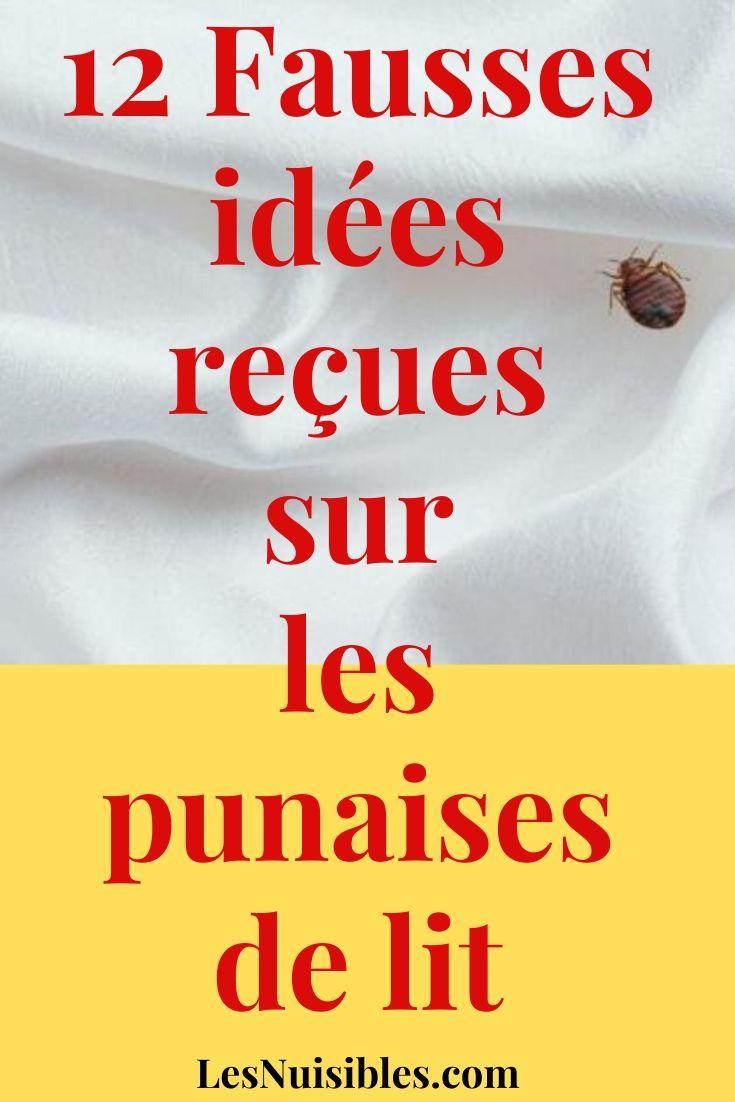 12 Fausses Idees Recues Sur Les Punaises De Lit Punaises De Lit Les Acariens Boutons Sur Le Corps