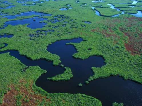 Everglades' wetlands sprawl 1.5 million acres across Florida's southern tip. Road trippers from Miam... - Marvin Dembinsky Photo Associates / Alamy