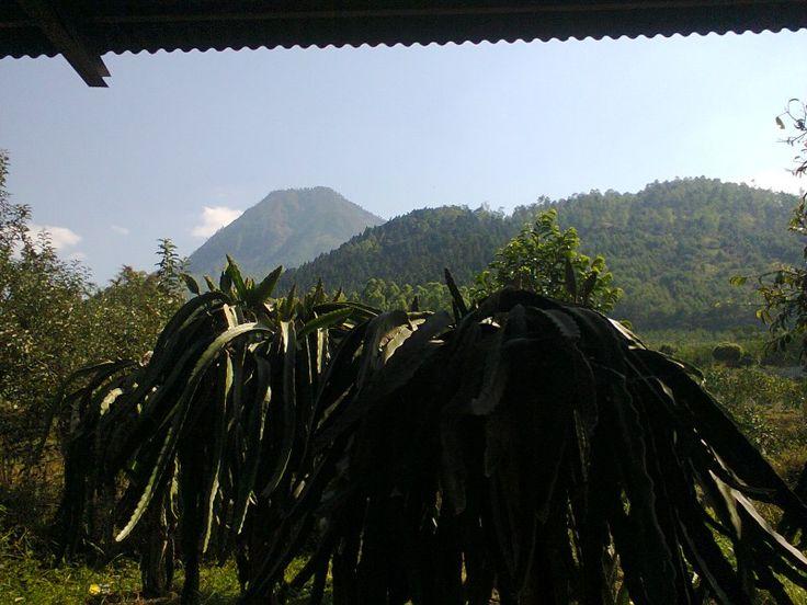 that's Mount Panderman