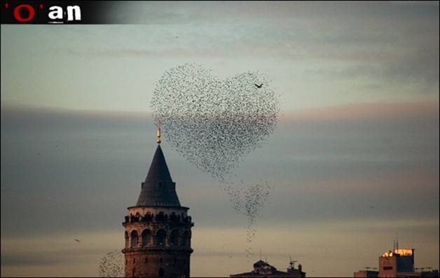 galata tower & birds, catching the perfect moment