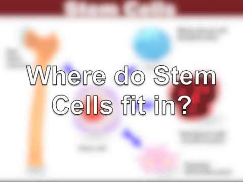 Stem Cells Telomeres Jeunesse Global - YouTube