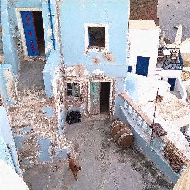 Найди сябу)  #vsco #vscorussia #vscoeurope #santorini #greece #dog #travel #instatravel #inspiration by asyalemlem