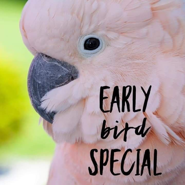 Early Bird Special In 2019 Color Street Nails Color Street Nail Garden