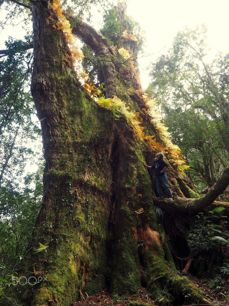 與神木的近距離接觸 - 台灣的世界遺產