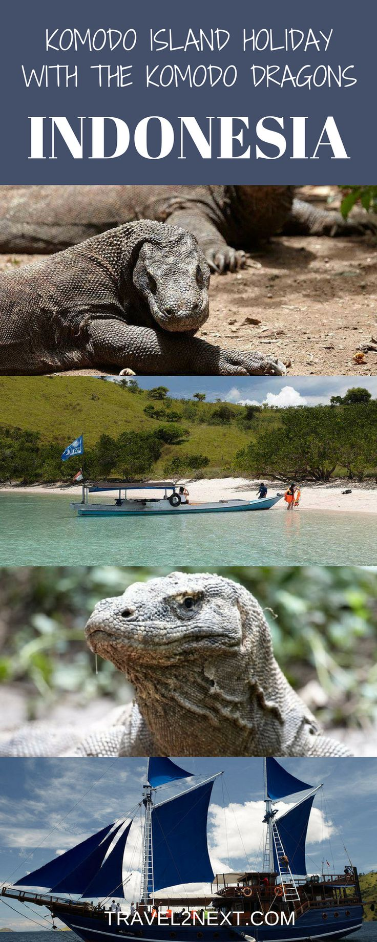 Komodo Island Holiday With The Komodo Dragons. Where to Komodo dragons live? Next time you're thinking of booking a trip to Bali, consider extending your holiday to Flores.