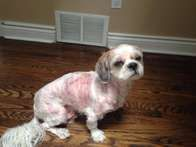 Donations are needed for Quincy who came to Happy Tails Rescue with a number of problems.  He is a sweet little guy who is 6 yrs old and has been neglected for many years. Please visit the donation site for more information https://www.canadahelps.org/en/pages/happy-tails-rescue-to-care-for-a-dog-in-need/#.VyFya5Klbzc.facebook #dogrescue