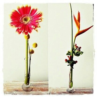 Flores tropicales exóticas en solitario una opción para tu decoración